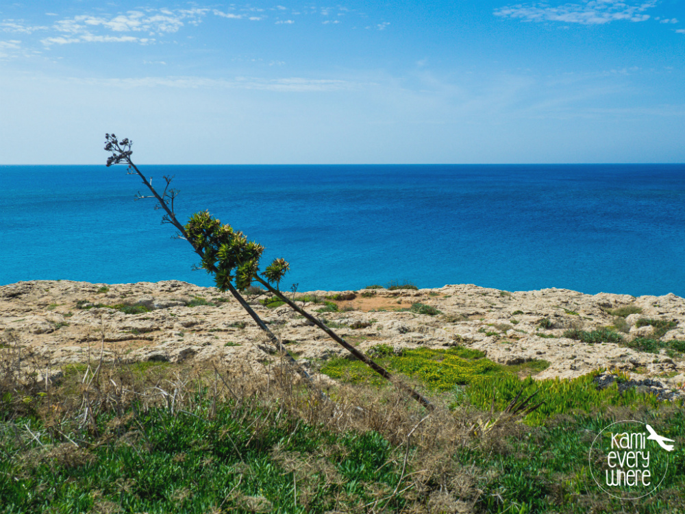 ayia napa cypr 4